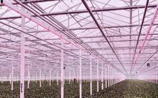Holanda, el Silicon Valley de la agricultura