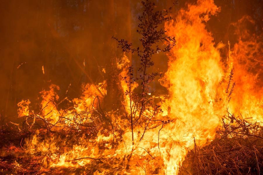 Los incendios del norte de España dejan un paisaje desolador