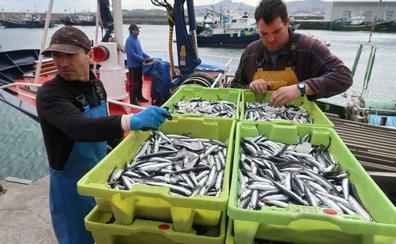 Descargan 50.000 kilos en los puertos vascos