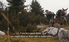 La OTAN elogia en un vídeo las mulas que compró en Murcia para el Ejército alemán