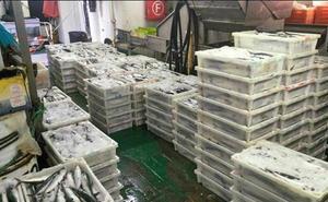 Retenido en Pasaia un pesquero portugués con 2.882 kilos de caballa no declarada y oculta