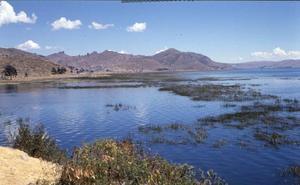 ¿Cómo descontaminar algunos lagos con algas?