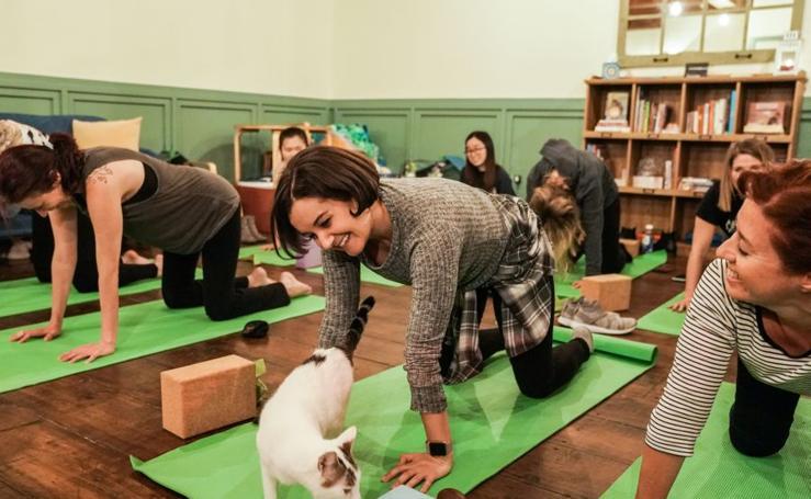 A clase de yoga con el gato