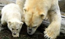 Nace un nuevo oso polar en Berlín