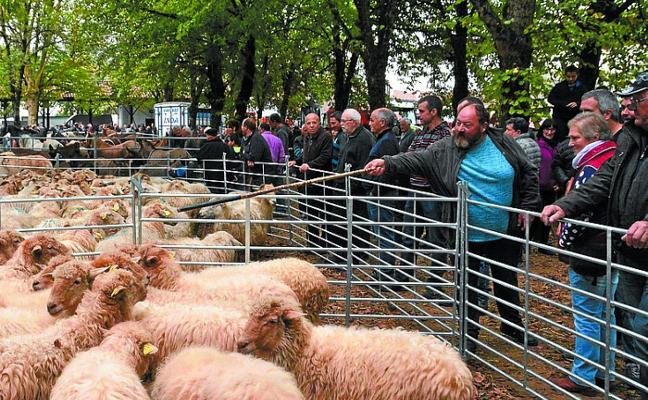 Intia elabora un plan para la dinamización del sector de ovino de leche de raza latxa