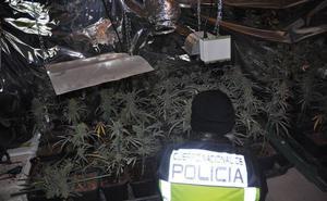Desmantelan un invernadero con 255 plantas de marihuana en Trapagaran