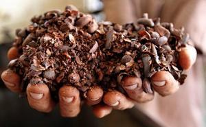 Compuestos presentes en el cacao para tratar enfermedades esqueléticas