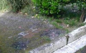 Fotodenuncia: Camino en mal estado en Aldapide