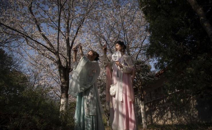 Los cerezos comienzan a florecer en China