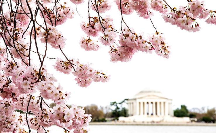 Floración máxima en Washington