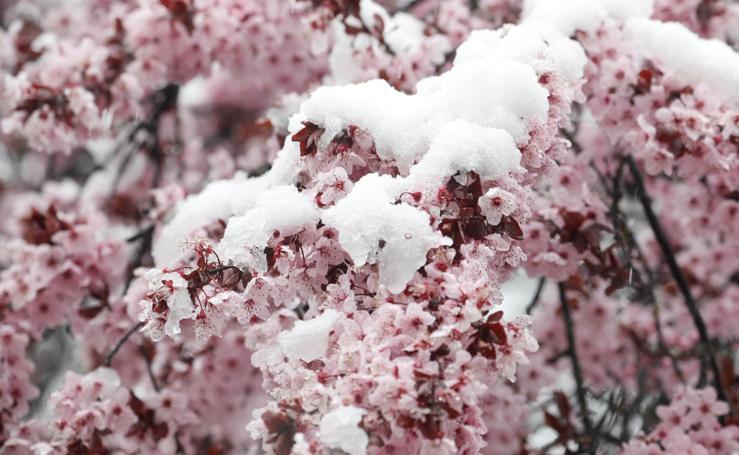 La nieve cubre la primavera