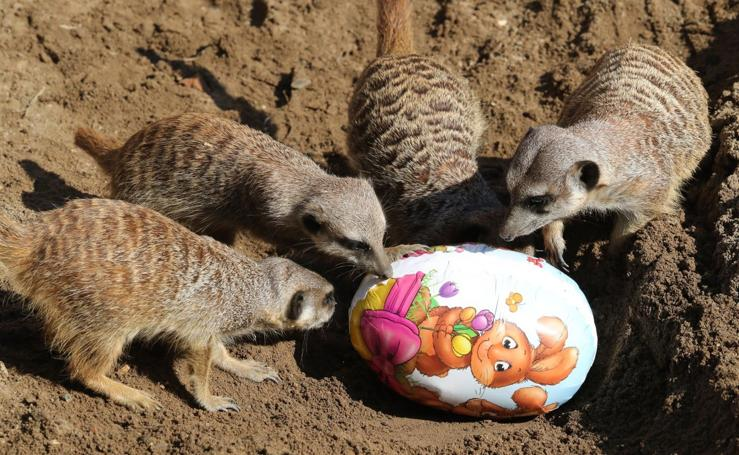 La Pascua llega al zoo de Hannover