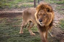 Las mejores imágenes de animales de la semana
