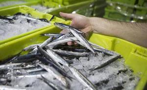La flota de cerco dejará de pescar anchoa en Semana Santa