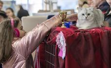 Concurso de felinos