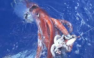 La ciencia tras el enigma del calamar gigante