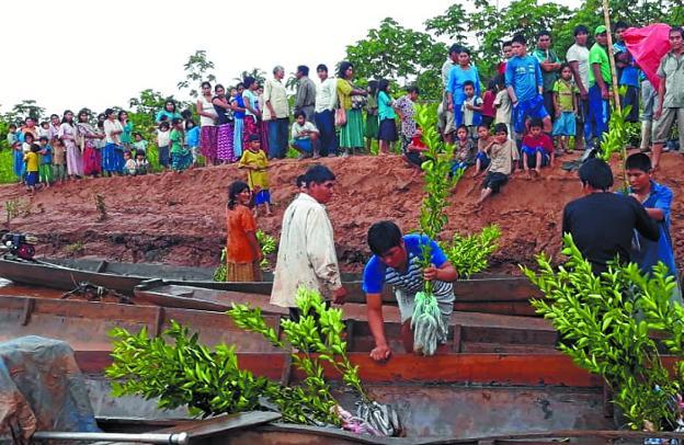 Amazonía boliviana. Proyecto de Taupadak para crear huertos de cítricos para mujeres en comunidades del río Maniqui; las plantas se trasladan en barca y el objetivo es mejorar la alimentación y empoderar a las mujeres./
