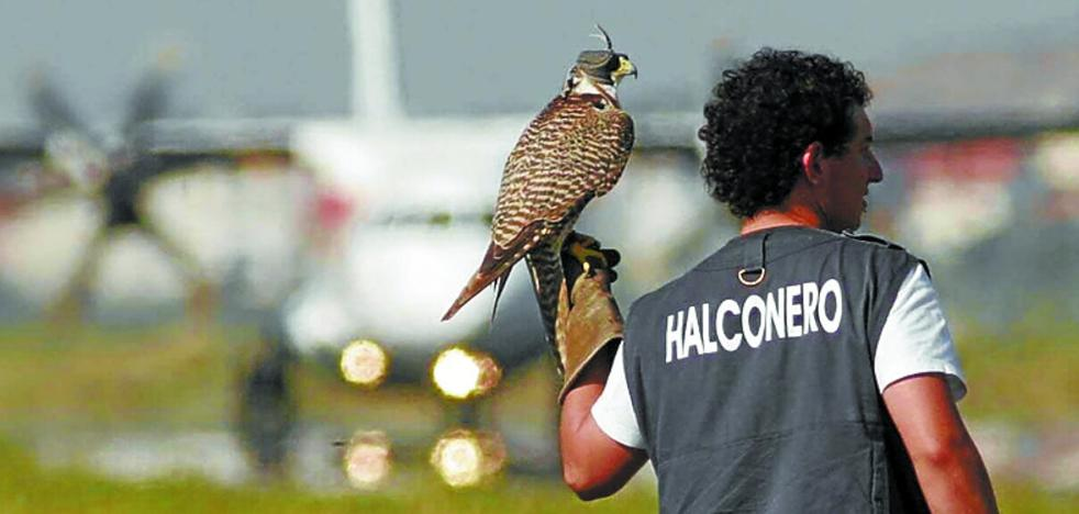 Contratos que espantan a los halconeros