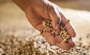 6 curiosidades del café orgánico que desconocías y dónde comprarlo