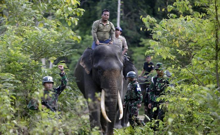 Elefantes policía