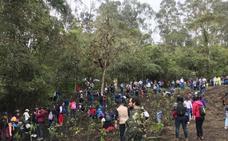 Una universidad colombiana sembrará 8.000 árboles para combatir la deforestación