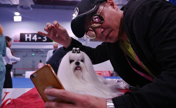 Exposición Mundial canina en Shangai