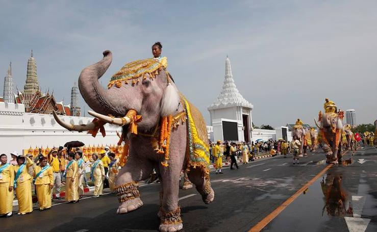Desfile de elefantes