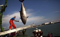 Mayo, la fiesta del atún en la costa de Cádiz