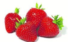 Fresas, un lujo para el paladar y la vista
