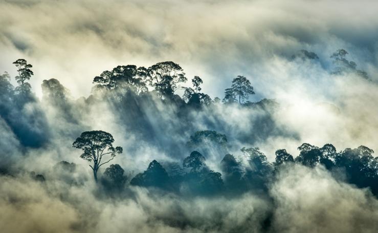 Arte y naturaleza: Premios GDT al fotógrafo del año
