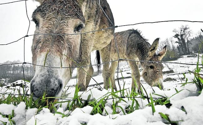 Los burros odian el mal tiempo