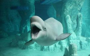 Oceanográficos revelan que falta información sobre más del 98% de las especies, como tasa de fertilidad y supervivencia