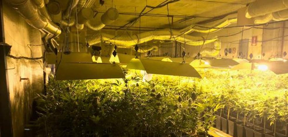 Cuatro condenados por un cultivo de 634 plantas de marihuana en Zizurkil