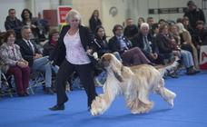 Feria Canina