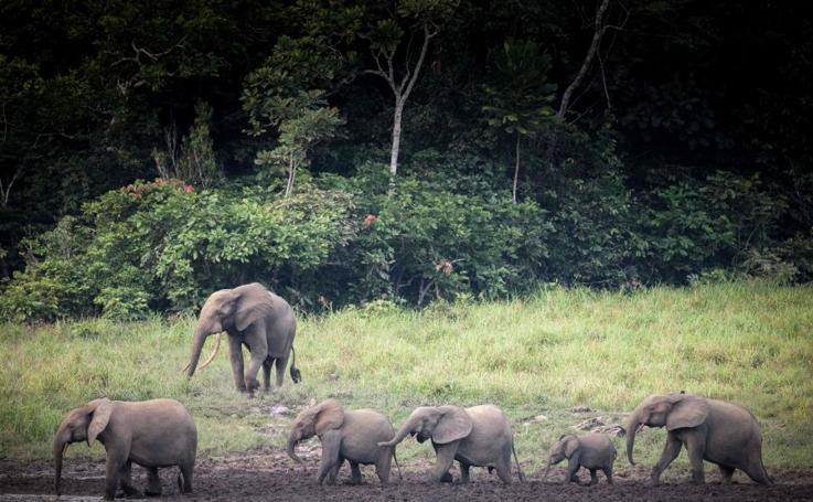 La vida en Gabon