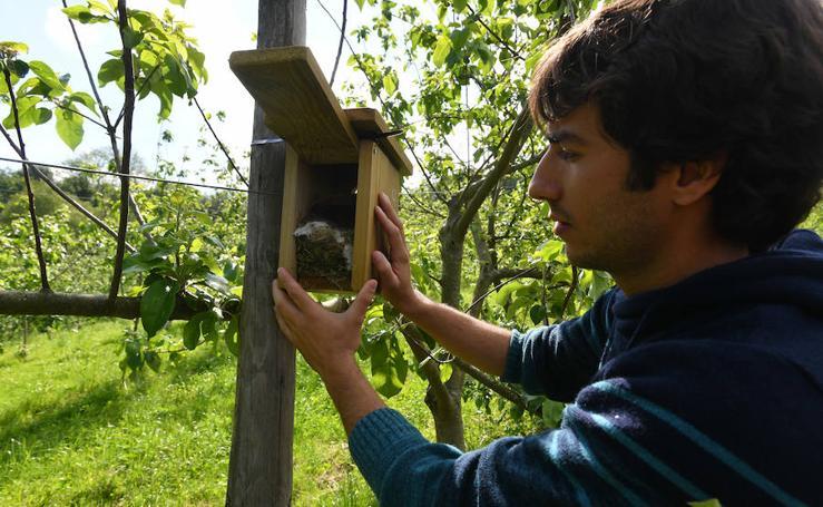 Aves y murciélagos, los nuevos escoltas de las viñas y manzanos de Gipuzkoa