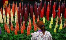 Arranca el 'Chelsea Flower Show' de Londres