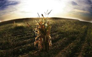 El cambio climático afecta ya a la producción de alimentos