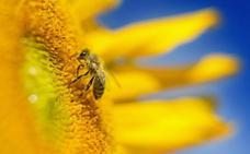 La amenaza de la desaparición de las abejas