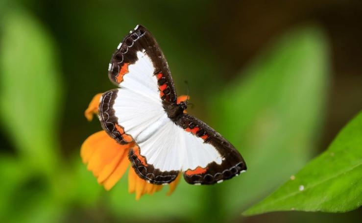 Costa Rica crea un parque nacional