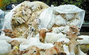 Nadie sabe qué hacer con la lana