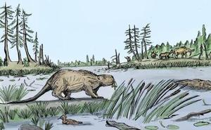 ¿Por qué desaparecieron los castores de tamaño humano hace 10.000 años?
