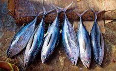 ¿Conoces las principales diferencias entre atún y bonito?
