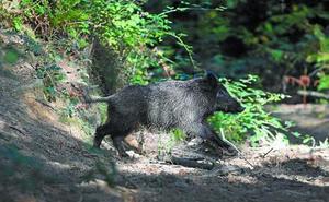 Enba pide un acuerdo entre la Diputación y los cazadores o que se revise la normativa