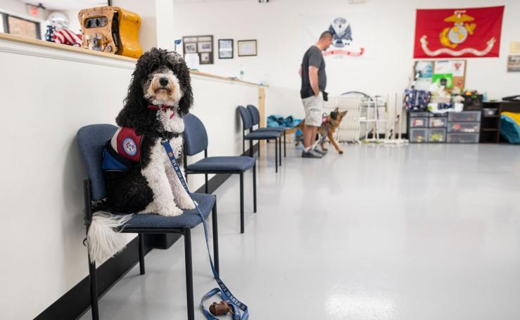 Adiestramiento militar canino