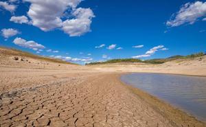 Investigan las 'venas de los árboles' para hacer frente a la sequía