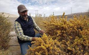 Un científico chileno crea un «desierto verde» para combatir el cambio climático