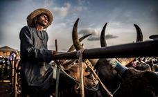 Los fulani, los últimos nómadas de África