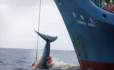 Japón reanuda este lunes la caza comercial de ballenas por primera vez en 30 años