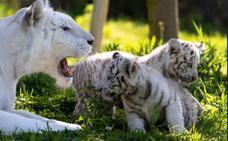 8 parques de animales para visitar en familia